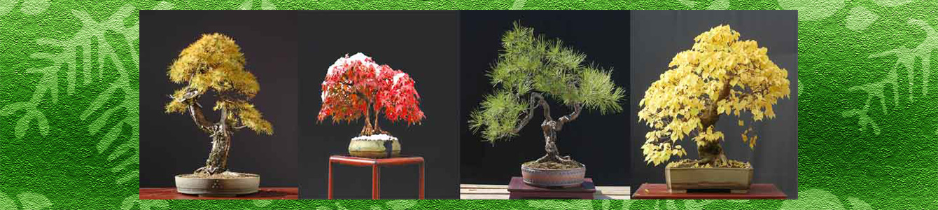 Bonsai Factor .com